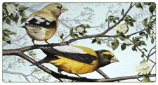 "Bird Paintings, Bird Art, ""Evening Grosbeaks"" by Gina Harman"