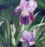Fine Art Flower Paintings