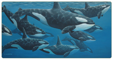 "Whale Art Paintings ""Like Peas in a Pod"" by Chris Harman"