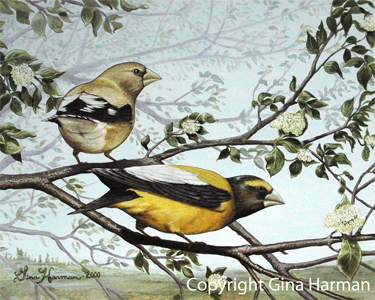 Fine Art, Fine Art, Fine Art Paintings, Fine Art Prints, Bird Prints, Bird Art, Birds Prints, Grosbeaks Prints