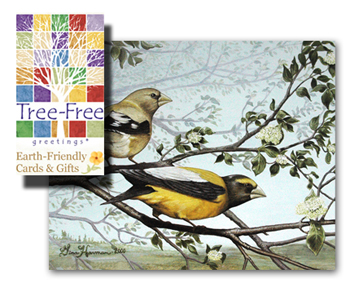 Greeting Cards by Tree Free Cards - Evening Grosbeaks Fine Art