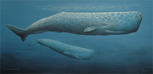 Scarred Giant (Sperm Whales)