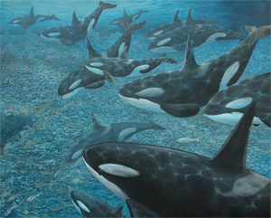 Orcas and Salmon (Killer Whales)