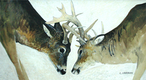 """Fighting Bucks"" Wildlife Painting"