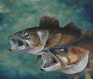 """Feeding Frenzy"" Walleye"
