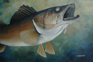 """Striking Walleye"" Walleye"