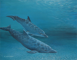 Peaceful Dolphins