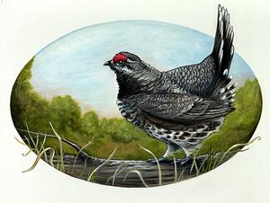 Spruce Hen