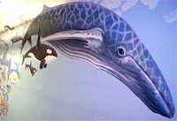 Large Scale Whale Mural